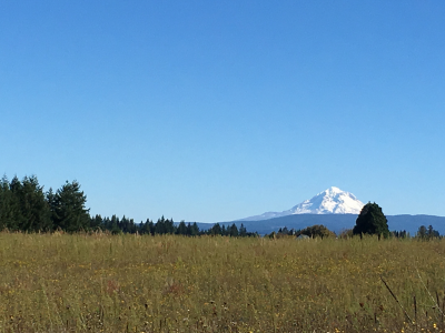 Mount Hood on a Clean Crisp Day
