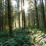 Sun peeking through the trees in Enchanted Wonser Woods