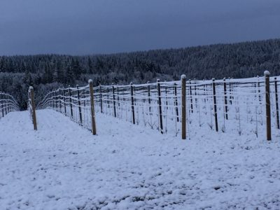 snowcovered-vineyard-oregon